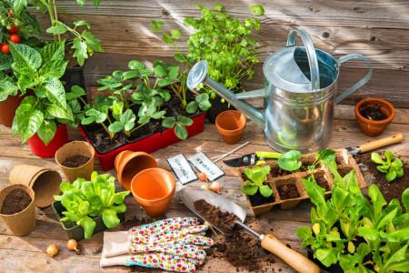 74646752 - planting seedlings in greenhouse in spring